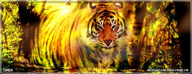 Camua c'est moi^^ Ban-tigre